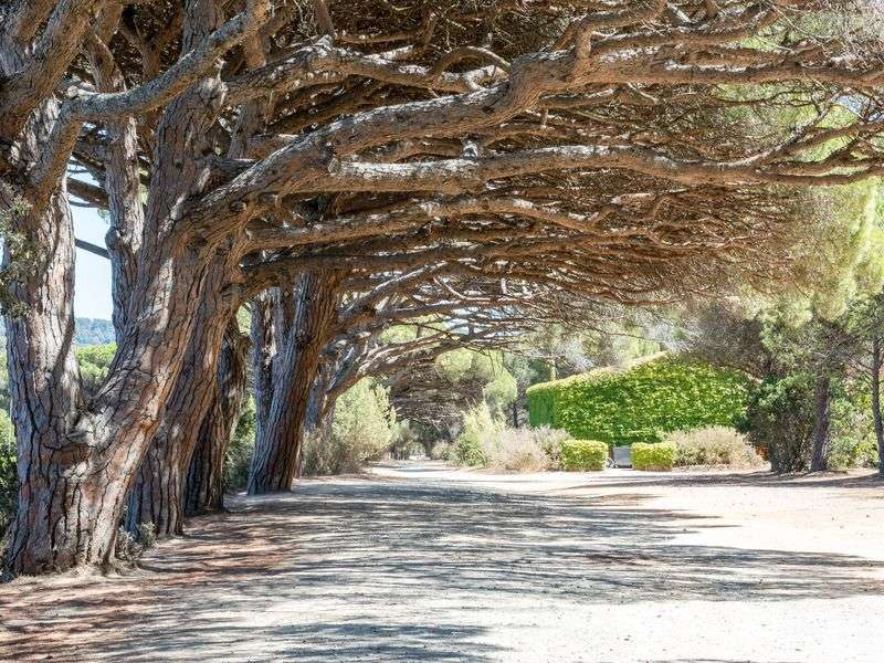 Culture sailing in Hyeres