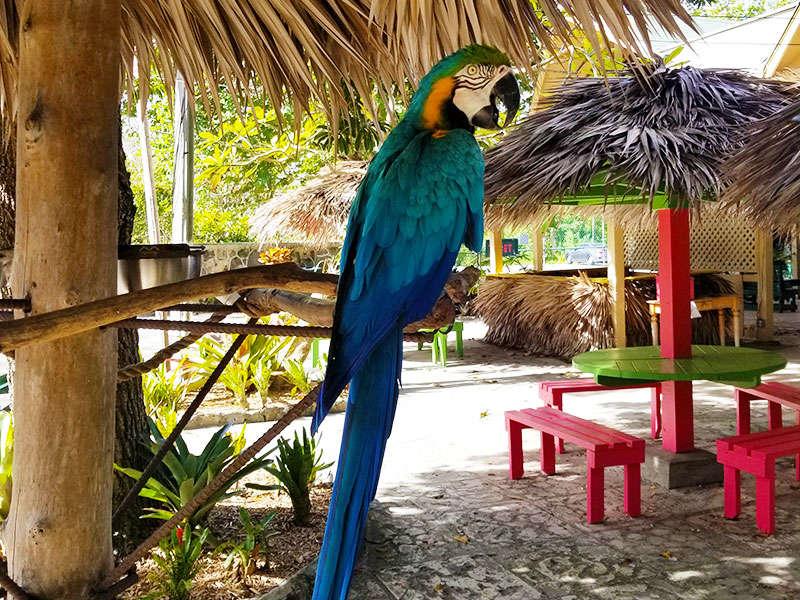 Bahamai látnivalók
